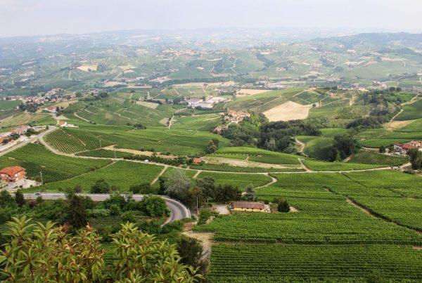 landschap bij Barolo