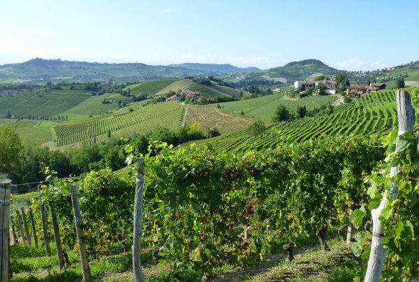 wijnlandschap Monforte