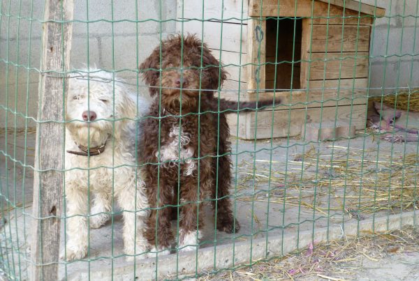 truffel hondjes