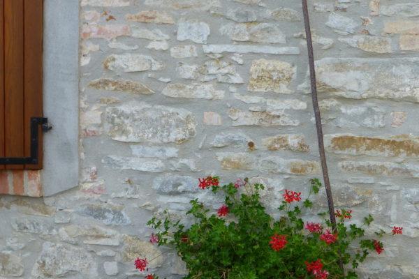 geraniums la casa vecchia